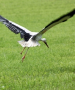 storch_5060