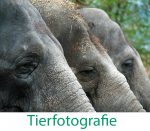tiere43-text